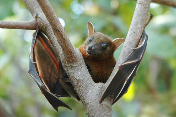 What Animals Live In The Rainforest? – 11 To Look At - Its about ...