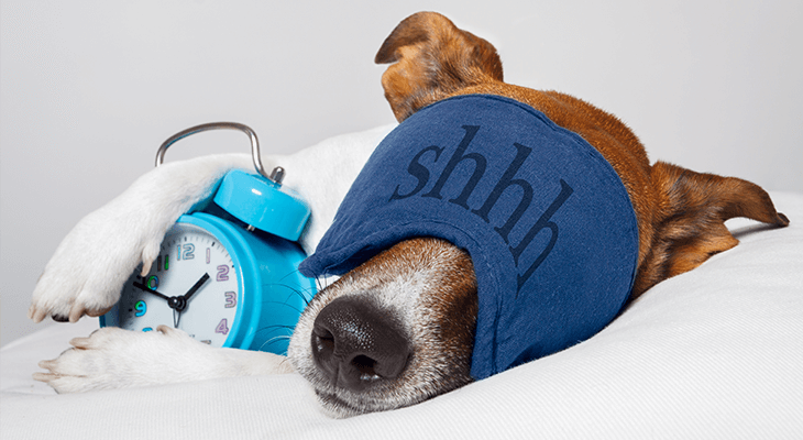how many hours a day do dogs sleep for