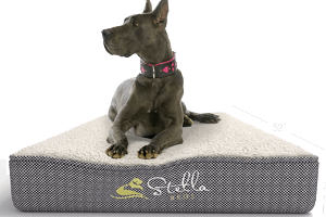 stella beds top rated dog bed