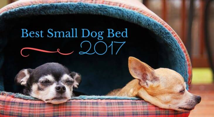 Best Small Dog Bed 2017