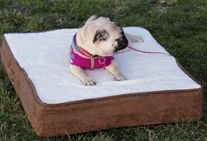 pet bed 4 less small dog