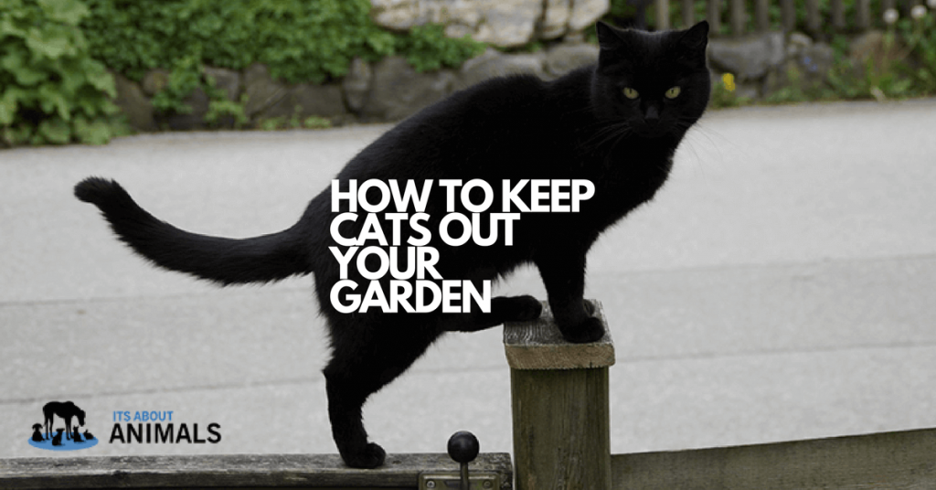 How to Keep Unwanted Cats Out of Your Garden with Cat Fence Spikes