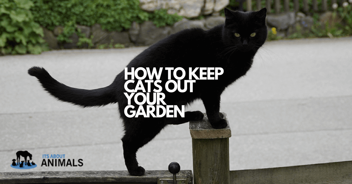How To Keep Unwanted Cats Out Of Your Garden With Cat