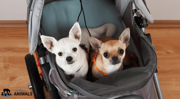 best rated pet stroller